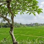 Villa Kouru - Bali Rice Fields