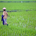 Villa Kouru - Bali Rice Fields Img2
