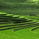 Villa Kouru - Bali Rice Terraces
